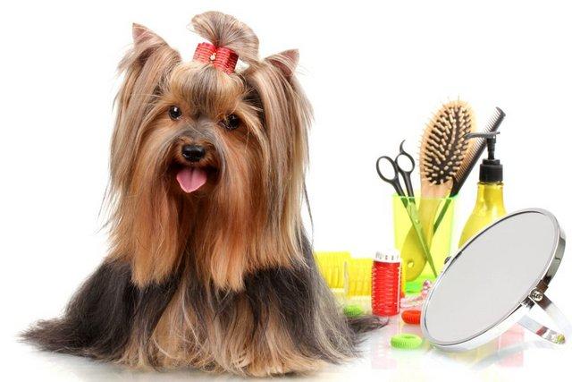 Tìm hiểu dịch vụ cắt tỉa lông chó tại nhà TpHCM
